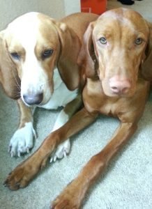 Madison & Nilla